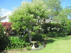 Garden at Acadia B&B, accommodation in Plettenberg Bay, Garden Route, South Africa